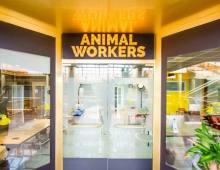 Coworking Boadilla del Monte Animal Workers
